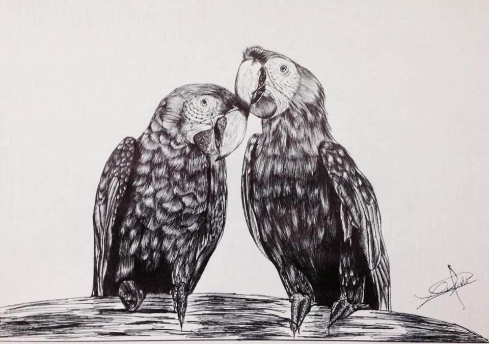 Lizbeth-macaws