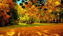 Autumnal stationery favourites