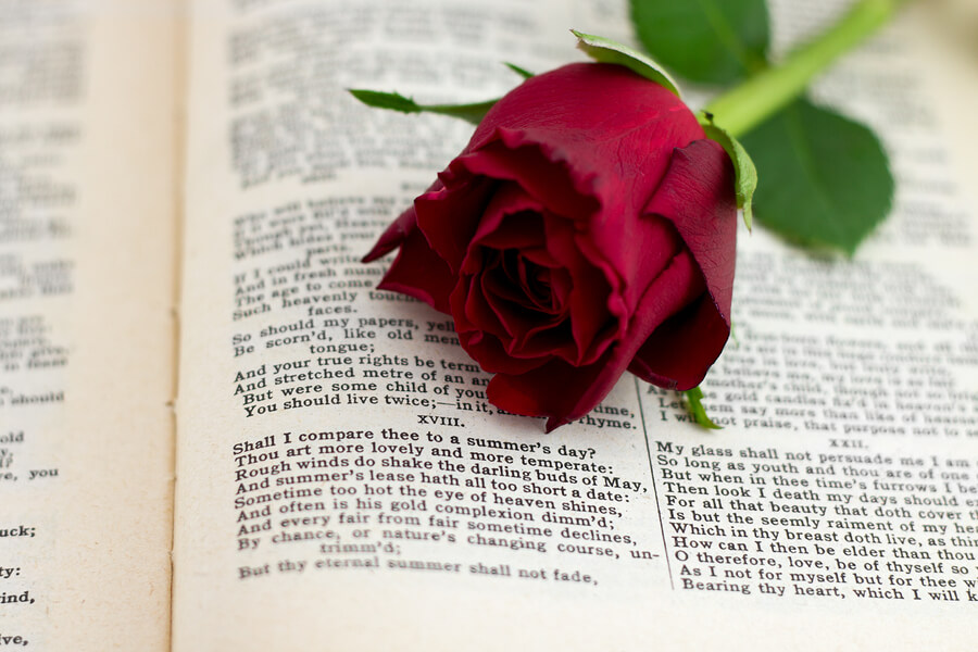 red rose and sonnet