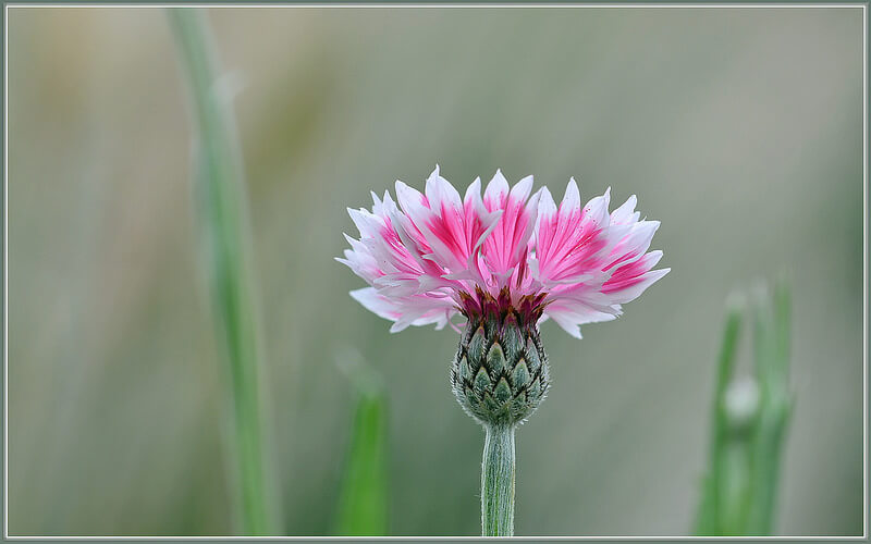 Flower seeds are a great item to send & receive! Photo by tdlucas5000 (Flickr).
